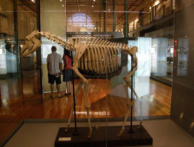 museociencia