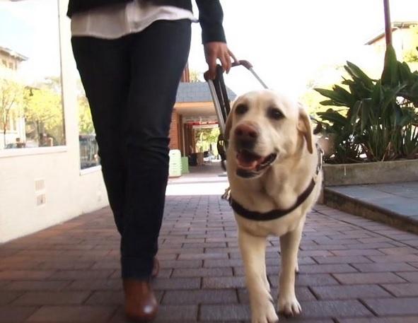 Los perros guías tiene mayor accesibilidad en la comunidad de Madrid